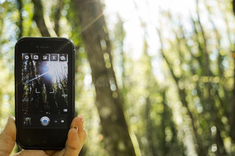Een Selfie in het hout royalty-vrije stock afbeelding