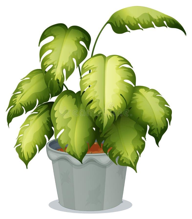 Een sierplant in een pot stock illustratie