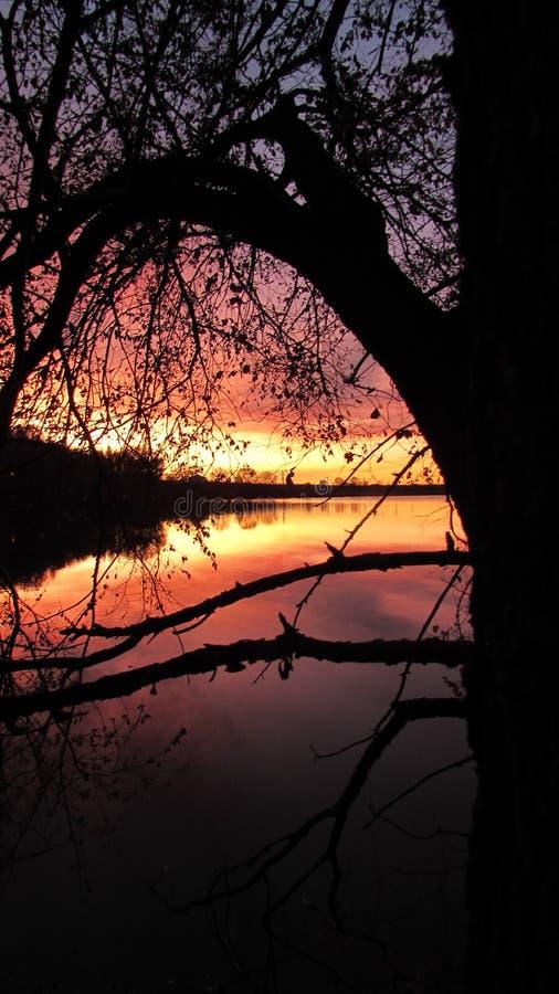 Een silhouet van een boom royalty-vrije stock afbeelding