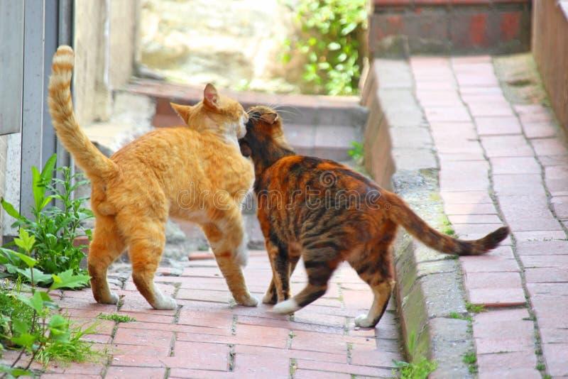 Een sinaasappel en een roodbruine gestreepte kat royalty-vrije stock afbeeldingen