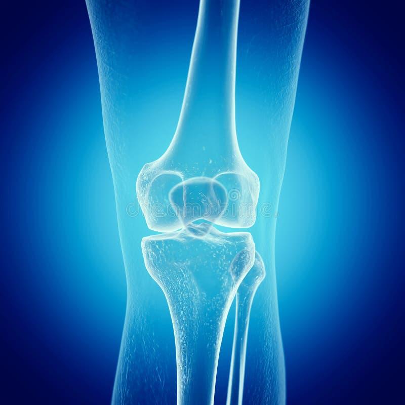 Een skeletachtige knie stock illustratie