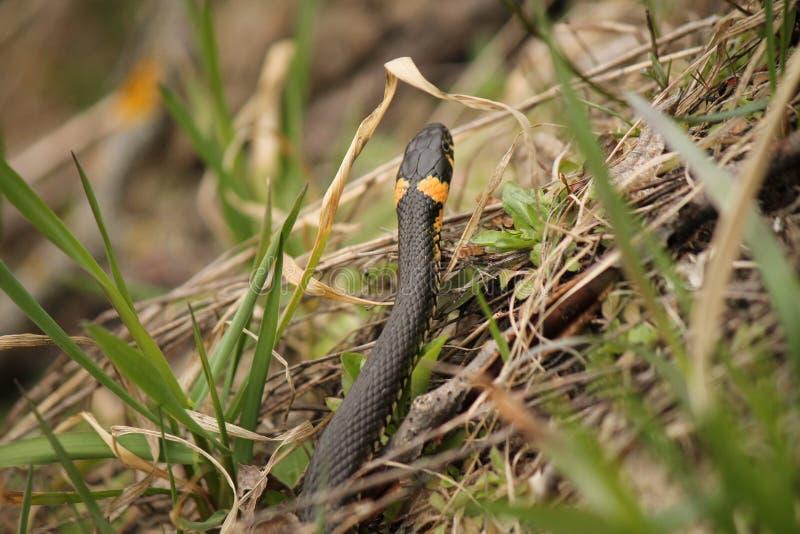 Een slang is werkelijk de zomer royalty-vrije stock afbeelding