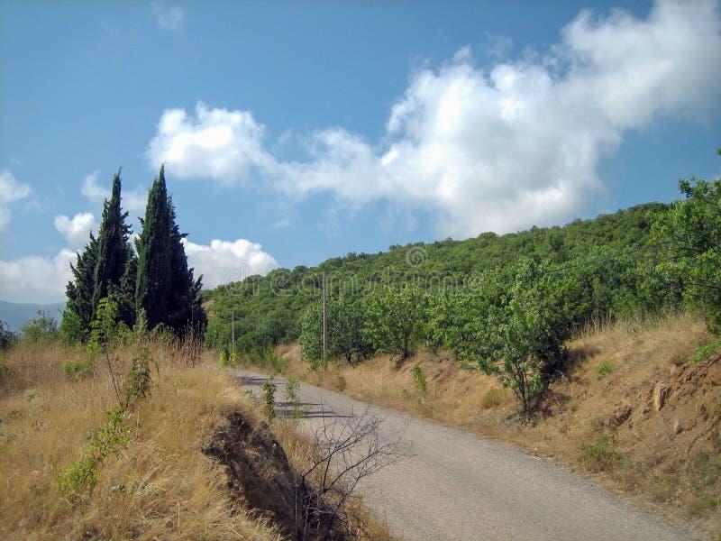 Een smalle asfaltweg op een hete Zonnige dag voorbij altijdgroene bomen en zon-geschroeid gras stock foto