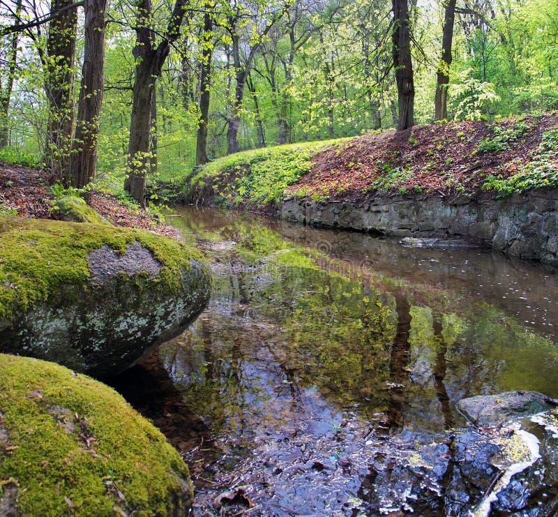 Een smalle die rivier onder de stenen door groen mos en gebladerte in het bos in de zomer worden behandeld stock fotografie