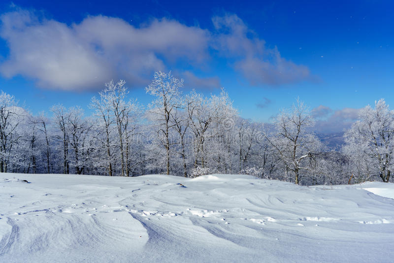 Een sneeuwgebied royalty-vrije stock foto's