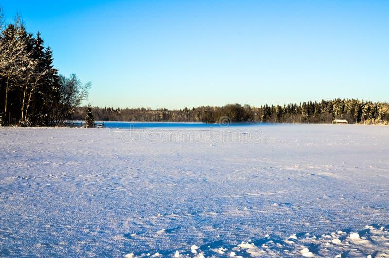 Een sneeuwgebied met een boslandschap stock afbeelding