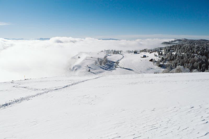 Een sneeuwhelling bij de bovenkant van de berg met pijnbomen op de achtergrond stock foto