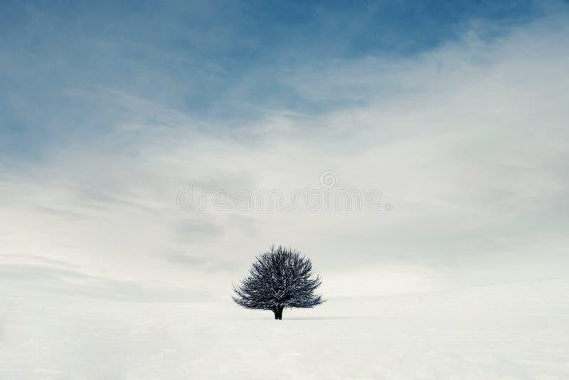 Een solitaire boom in de bergen royalty-vrije stock foto's