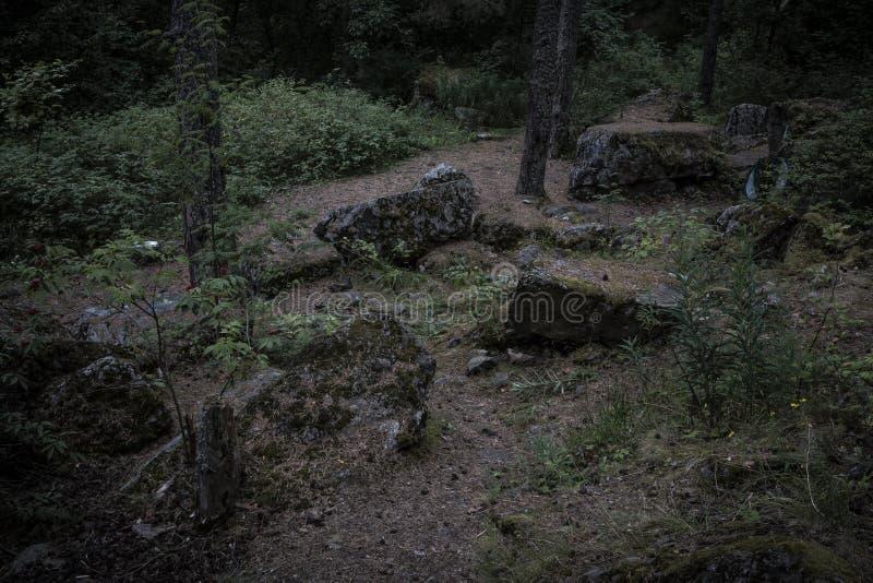 Een sombere bosweg onder mos behandelde keien stock foto's
