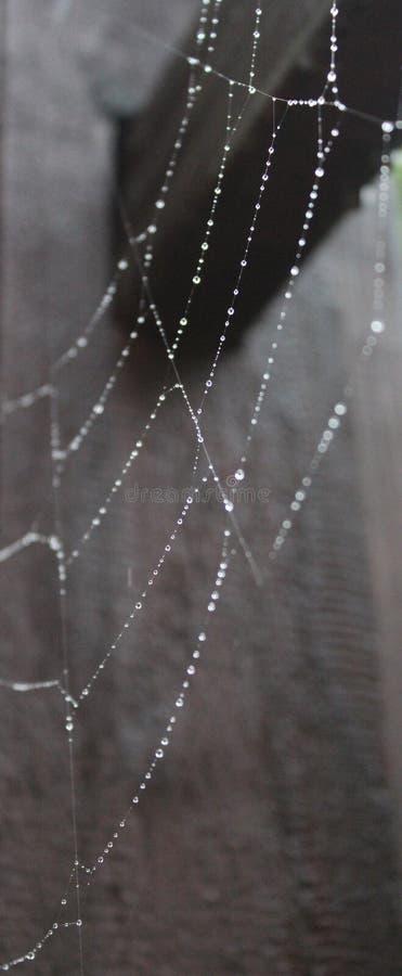 Een spierweb met waterdrops stock foto's
