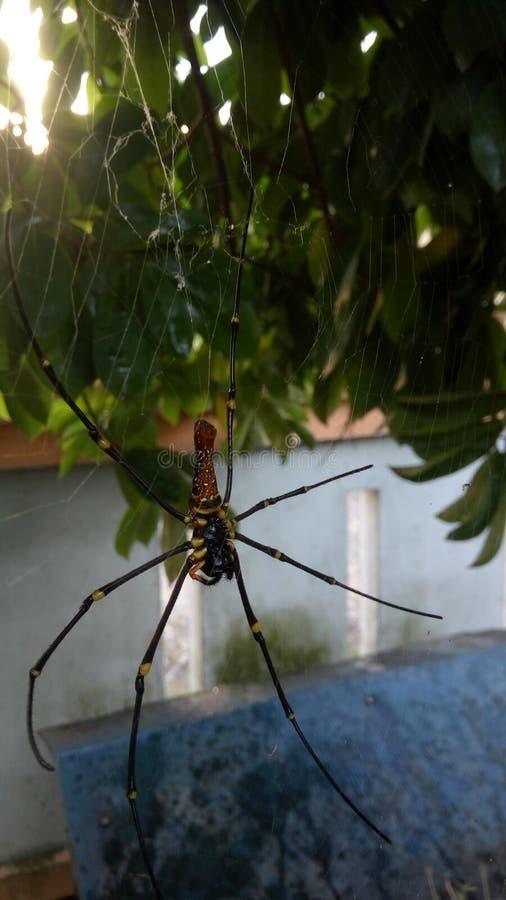 Een spin stock foto's