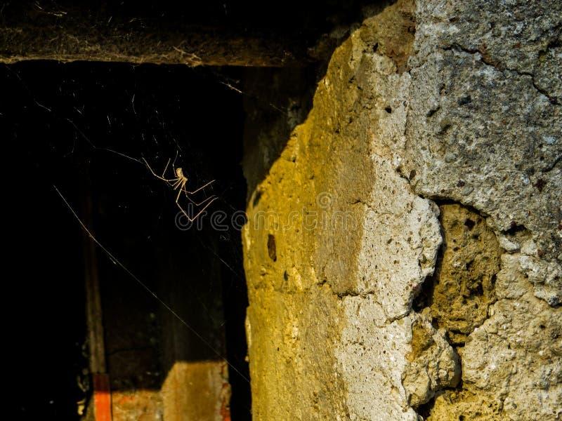 Een spin en zijn Web royalty-vrije stock afbeelding