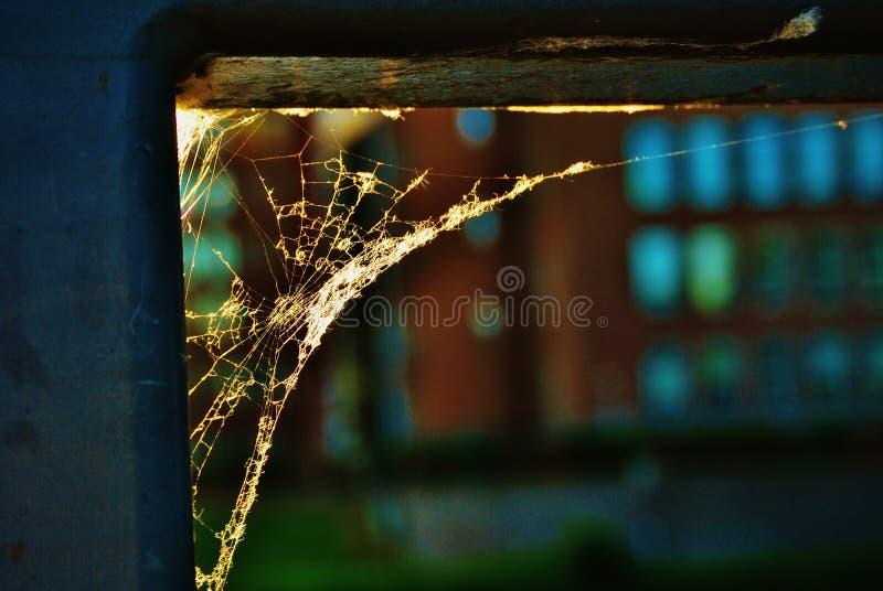 Een spinneweb royalty-vrije stock foto's