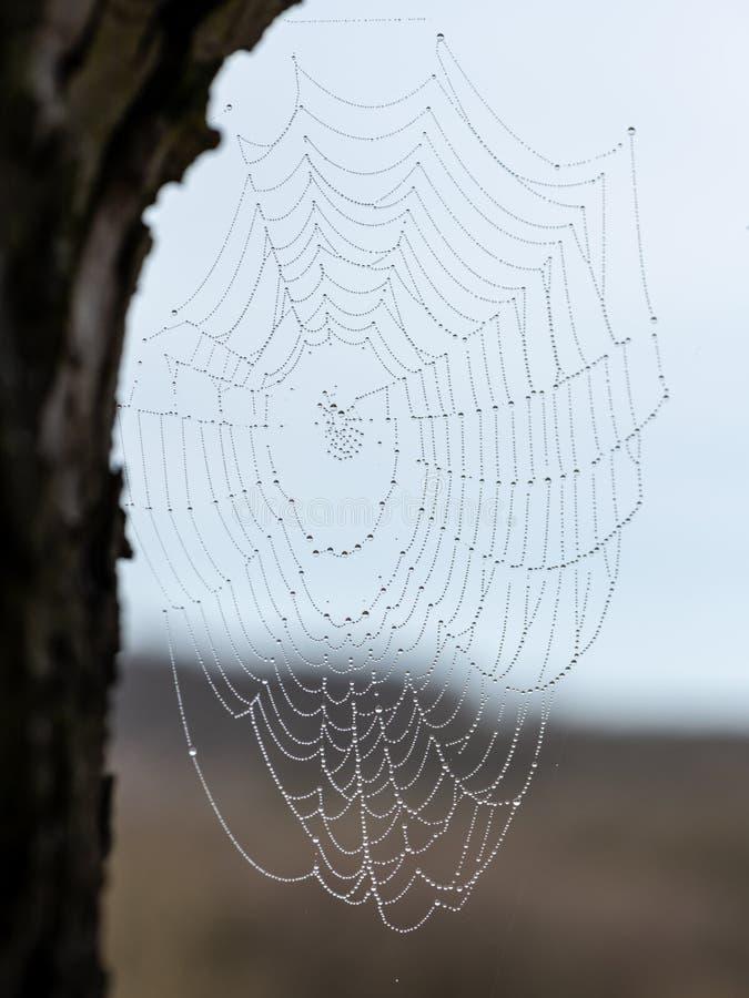 Een spinneweb met waterdalingen in de ochtend royalty-vrije stock afbeeldingen