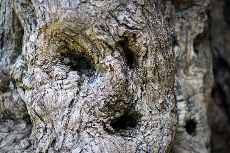 Een spook in een boom royalty-vrije stock afbeelding