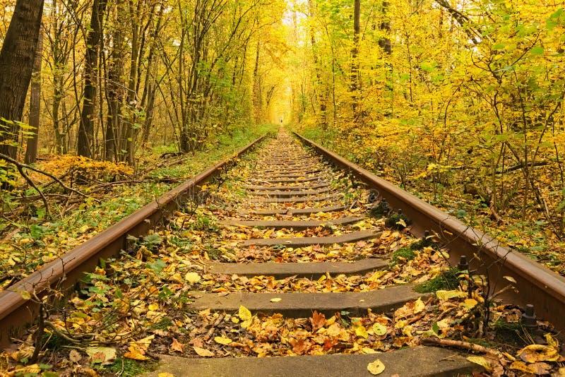 Een spoorweg in de de herfst bos Beroemde die Tunnel van liefde door bomen wordt gevormd Klevan, Rivnenska obl ukraine stock foto