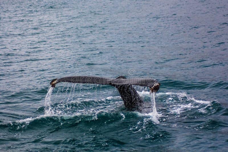 Een staart van een grote vis in het water stock foto's