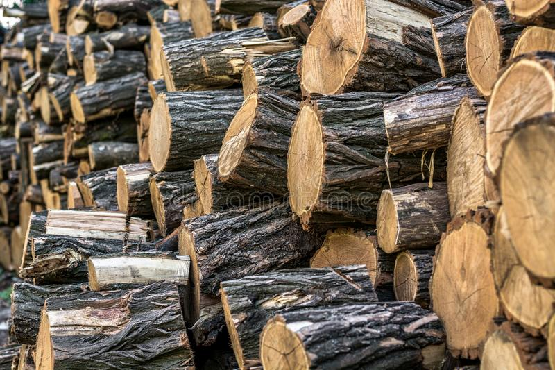 Een stapel van gezaagde heel wat boomboomstammen, cutted logboeken stock fotografie