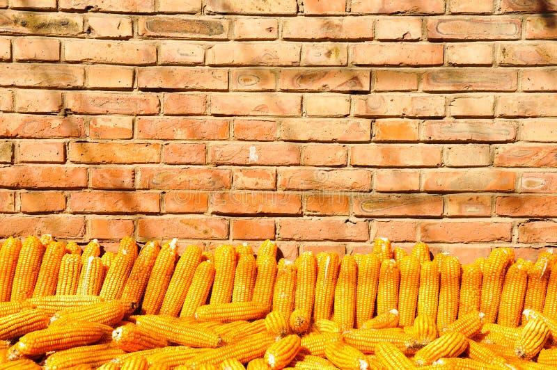 Een stapel van gouden graan met bakstenen muurachtergrond royalty-vrije stock fotografie