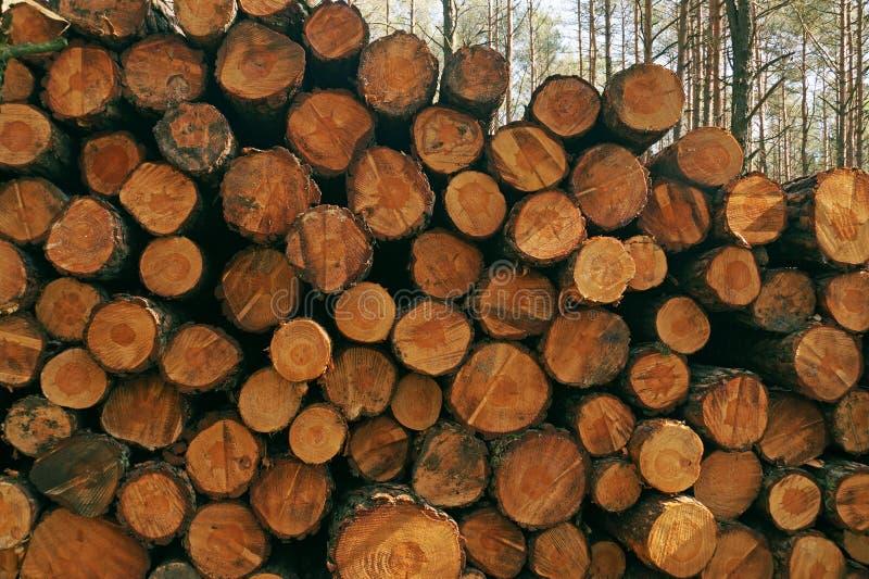 Een stapel van hout na het verwijderen van een bosboomboomstammen die op vervoer worden voorbereid royalty-vrije stock foto's