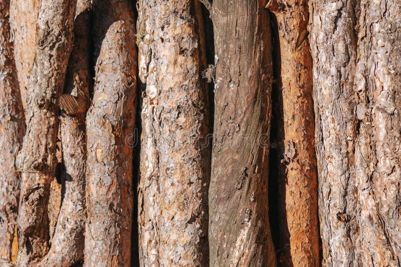 Een stapel van houten logboeken treft voor de houten industrie voorbereidingen stock fotografie