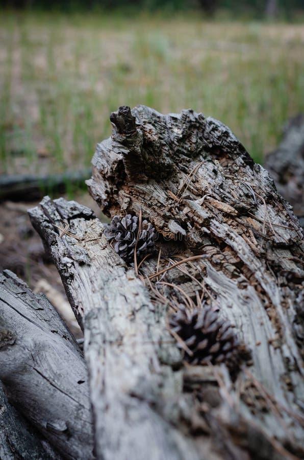 Een stapel van oude logboeken dichtbij de jacht brengt onder Reis door de bossen van het land stock foto