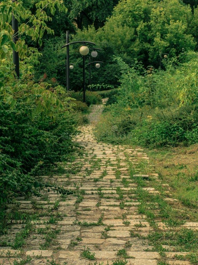 Een steenweg in het park tussen de struiken royalty-vrije stock fotografie