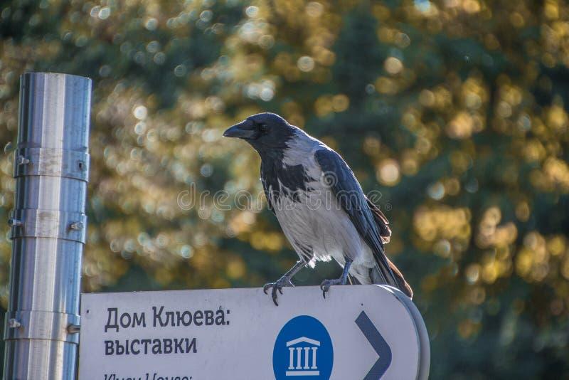 Een sterke blik wijze vogels stock foto