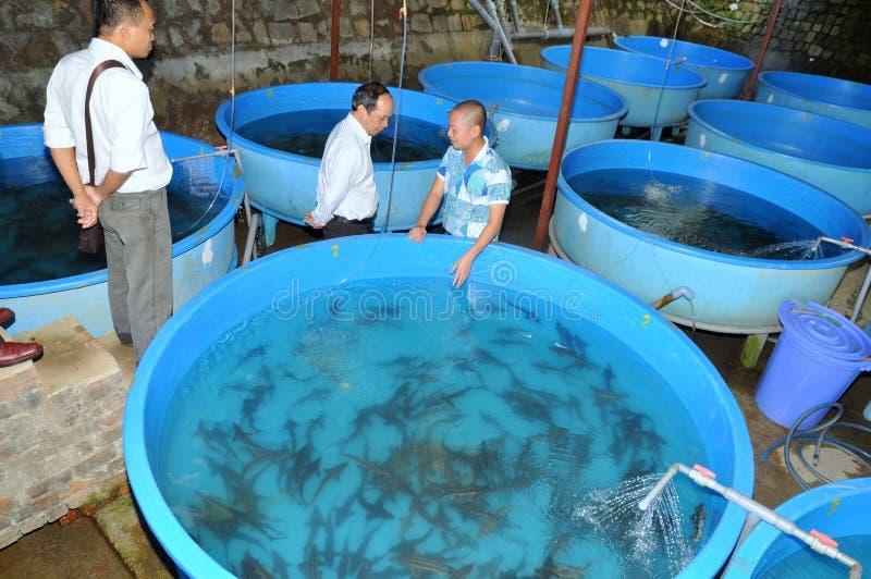 Een steurbroedplaats wordt geïntroduceerd aan landbouwers in het meer van Tuyen Lam, de stad van DA Lat royalty-vrije stock afbeelding
