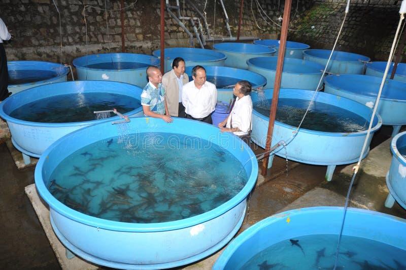 Een steurbroedplaats wordt geïntroduceerd aan landbouwers in het meer van Tuyen Lam, de stad van DA Lat royalty-vrije stock afbeeldingen