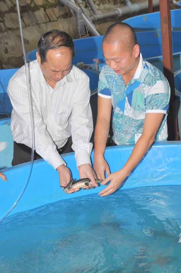 Een steurbroedplaats wordt geïntroduceerd aan landbouwers in het meer van Tuyen Lam, de stad van DA Lat royalty-vrije stock foto's
