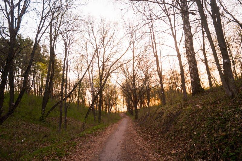 Een stille weg in het wilde bos royalty-vrije stock afbeeldingen
