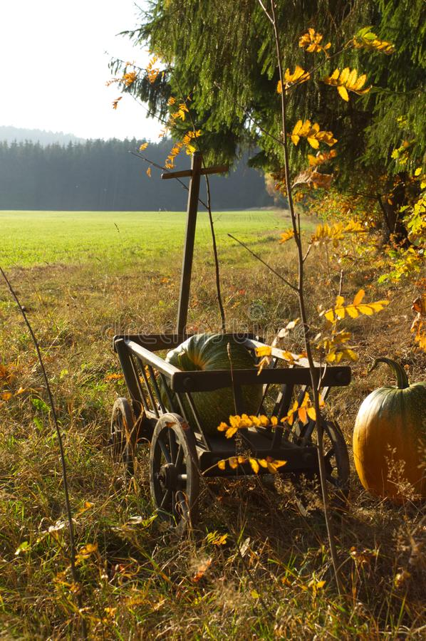 Een stootkar met twee pompoenen in zonnig landschap stock afbeelding