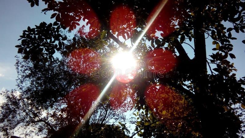 Een straal van zonneschijn stock afbeeldingen