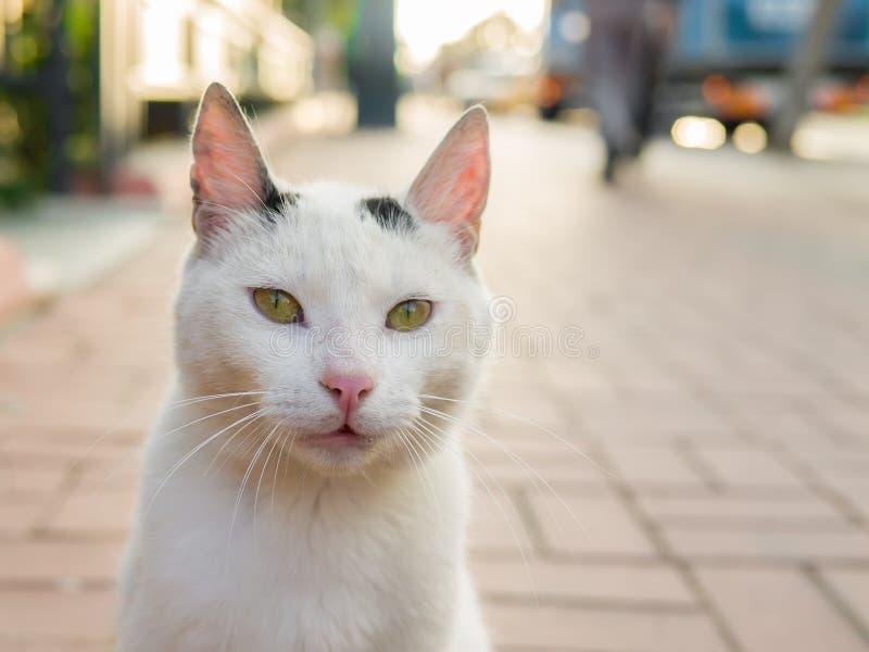 Een straatkat die rechtstreeks aan de camera kijken royalty-vrije stock afbeelding
