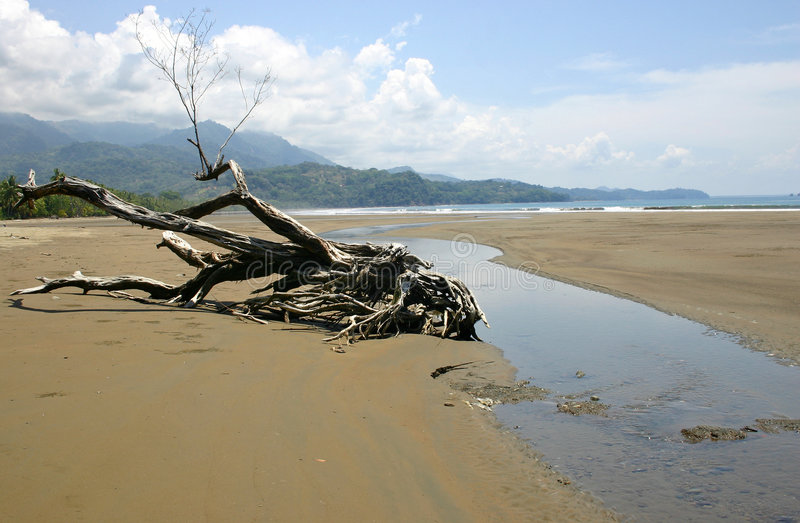 Een strand in Costa Rica stock foto