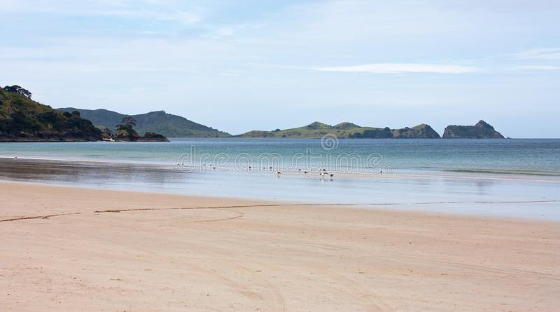Een strand, het overzees en de groene heuvels in de afstand in Coromandel in Nieuw Zeeland stock afbeeldingen