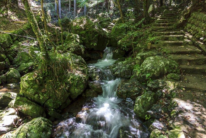Een stroom met een kleine waterval die met weelderige groene veget wordt omringd stock foto's