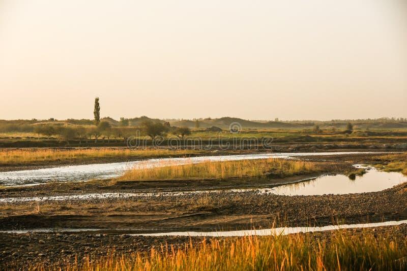 Een stroom van het moerasland in de woestijn stock foto's