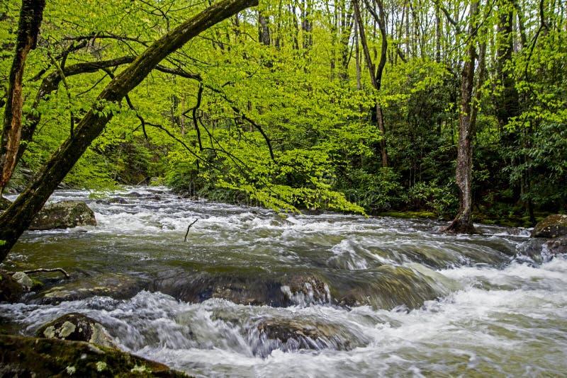Een stroomversnellingstroom is omringd met groen in Smokies stock afbeelding