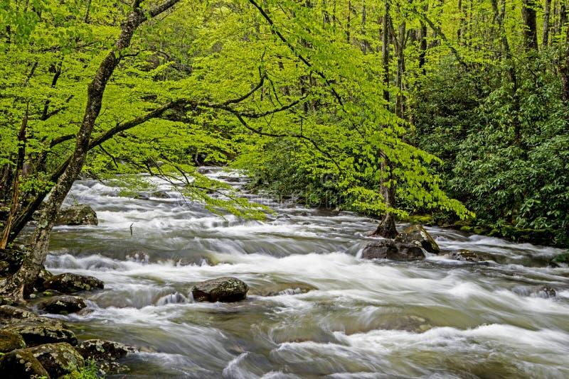 Een stroomversnellingstroom is omringd met groen in Smokies royalty-vrije stock afbeelding