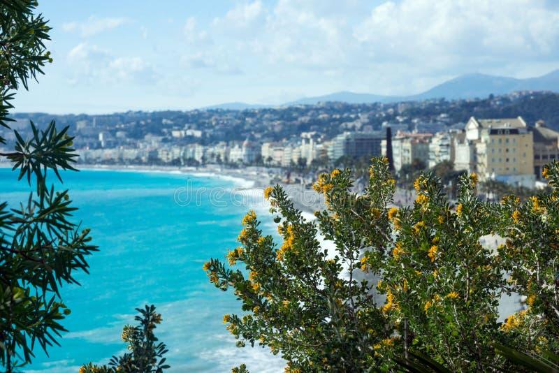 Een struik van gele acacia bloeit tegen de achtergrond van het azuurblauwe overzees en de Franse stad van Nice stock afbeeldingen