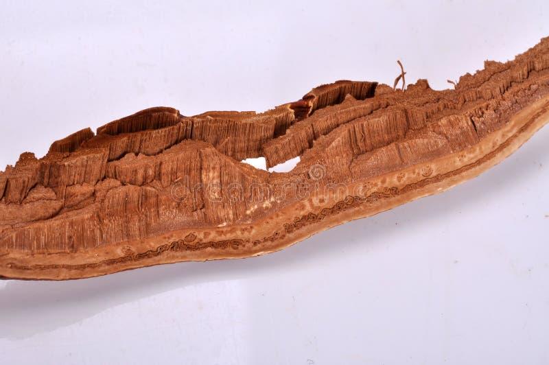 Een stuk van gesneden ganoderma--een traditionele Chinese geneeskunde stock afbeelding
