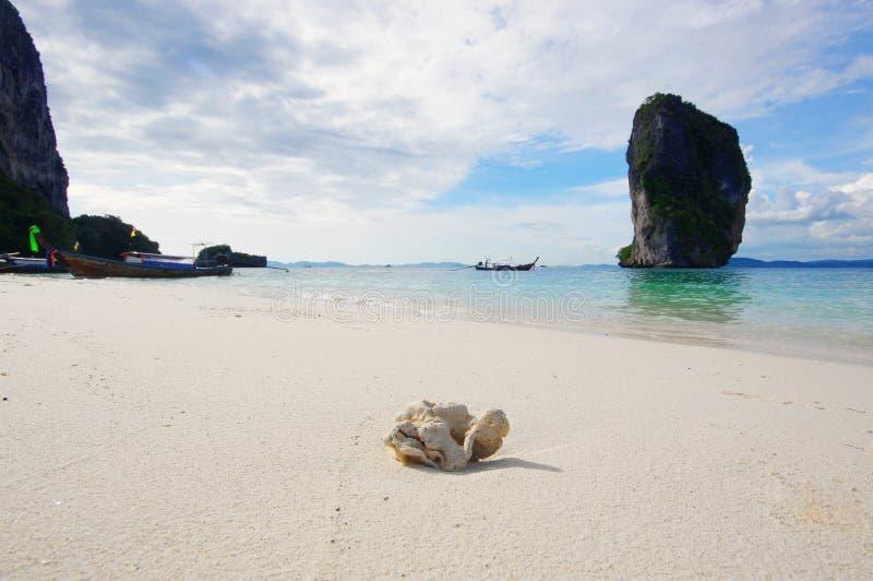 Een stuk van een koraal op het strand van een tropisch eiland royalty-vrije stock foto