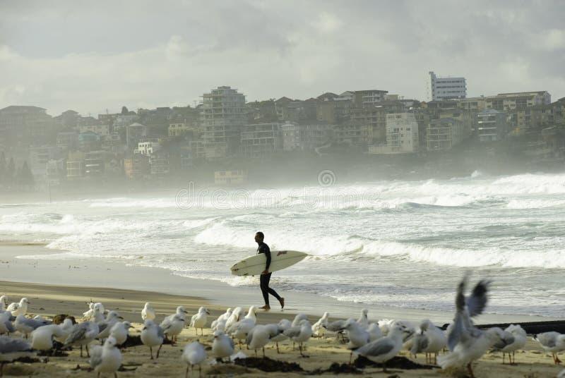 Een surfer bij Mannelijk strand, Sydney, Australië royalty-vrije stock fotografie