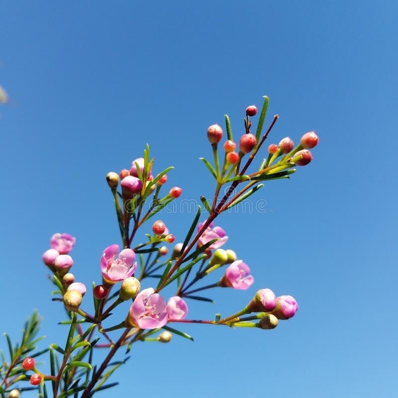 Een tak van bloemen stock foto's