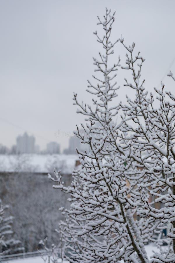 Een tak van een boom met sneeuw van alle kanten op de achtergrond van een de winterstad die wordt behandeld royalty-vrije stock fotografie