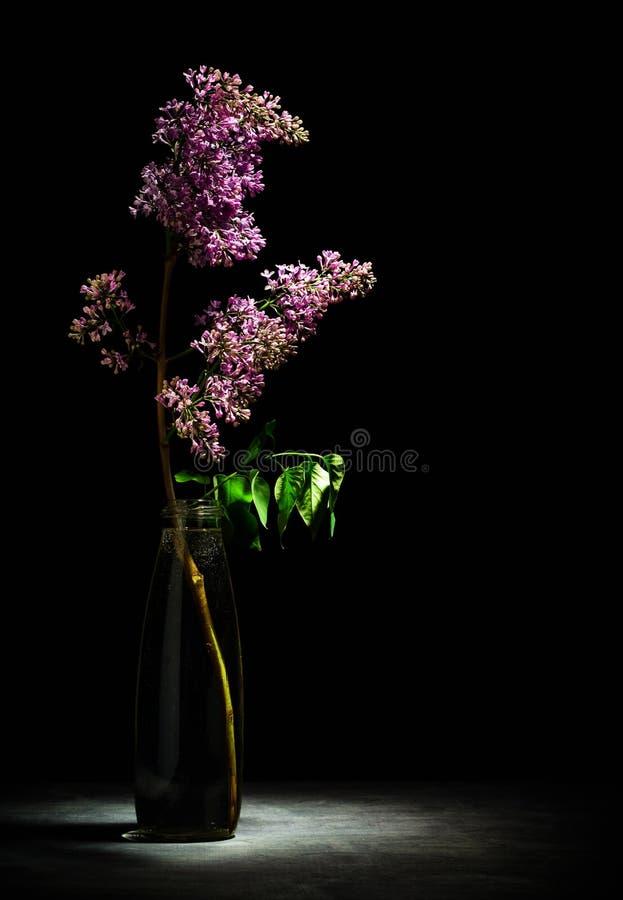 Een tak van verse sering met bloemen die zich in een fles water bevinden Een spatie voor een prentbriefkaar of achtergrond voor e stock foto's