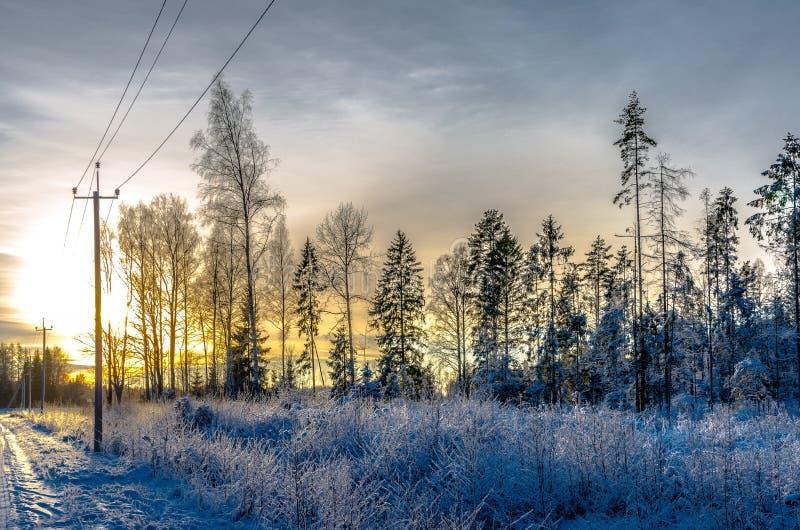 Een telefoonpool door een sneeuwbos bij zonsondergang stock foto's