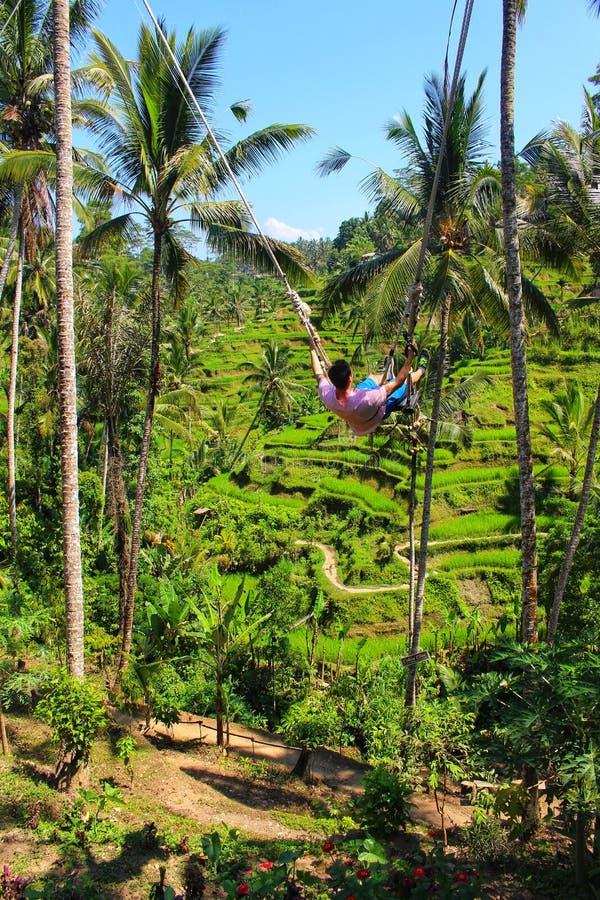Een toerist geniet van een kabelschommeling over de iconische rijstterrassen van Ubud Bali royalty-vrije stock foto's